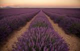 Panorama di un campo di Lavanda della campagna della Provenza, Francia, al tramonto