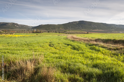 Fotobehang Purper Barley fields in an agricultural landscape in La Mancha, Ciudad Real Province, Spain. In the background can be seen the Toledo Mountains