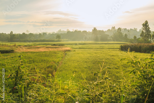 Foto op Canvas Europa Rice fields of green with trees background in morning light sunrise