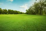 green grass field in public park - Fine Art prints
