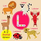 Fototapety L letter tracing. Ladybird. Leopard. Lion. Llama. Lobster. Lemur. Cute children zoo alphabet flash card. Funny cartoon animal. Kids abc education. Learning English vocabulary. Vector illustration.