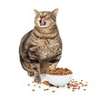 Obese Cat With Heaping Bowl of Food
