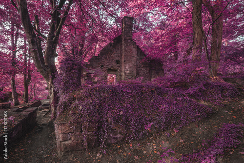 Foto op Canvas Crimson Spooky old ruined derelict building in thick surreal forest land