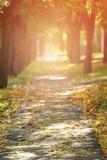 Jesienią złote linden aleja w mieście spadające liści