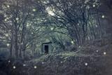 Casetta delle fate nel bosco incantato