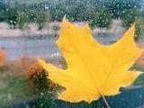 капли осеннего дождя из окна