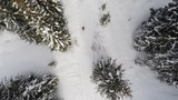 A hiking woman walking towards the woods in winter condition. Aerial shot.