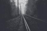 Железнодорожный путь между деревьями в утреннем тумане