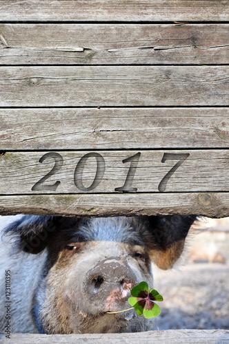 2017 Glücksschwein Poster