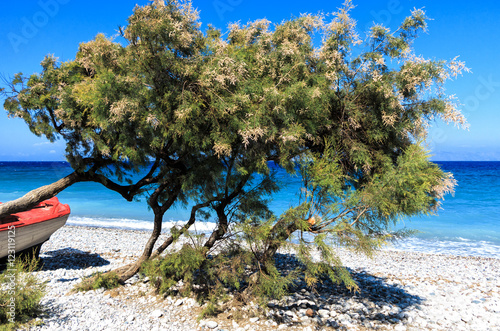 Poster Divi divi trees and a red boat on the beach on the coast of Greek Island Rhodes