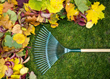 Fototapety Rake on a wooden stick and Colored  autumn foliage. Collecting grass clippings. Garden tools.
