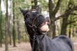 funny smiling black horse