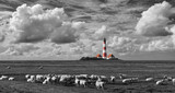 Leuchtturm von Westerhever mit Schafen SW Col - 123159150