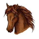 Brown graceful horse vector portrait