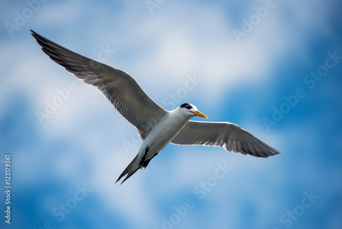 Fotobehang Seagulls in Gulf of Thailand