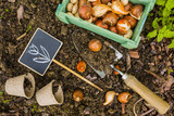 Flower bulbs and garden accessories for planting. Gardening.