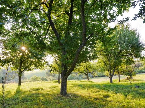 Poster Streuobstbiotop mit Apfelbäumen