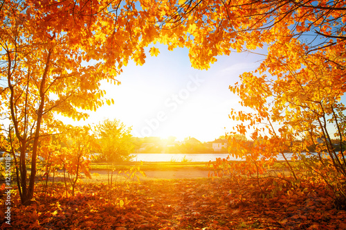 Poster  autumn trees on sun