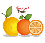 tropical fruits fresh banner vector illustration design