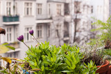 Fototapety Window view: european houses seen from balcony, plants and flowers on balcony railings