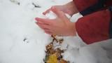 child sculpts a snowball bare hands