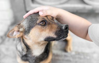man caresses a dog hand