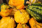 yellow decorative pumpkins