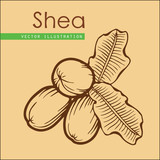 shea nuts_brown