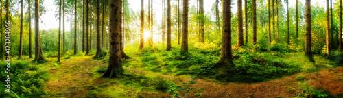 idylliczny-wschod-slonca-w-jesiennym-lesie