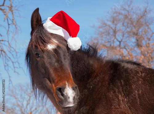 Cute dark bay horse wearing a Santa hat