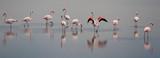 beautiful light on pink flamingo group