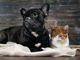 Dog and cat on a background of an old wooden wall. Pets are pressed together