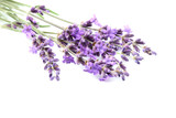 Fresh lavender flowers isolated.