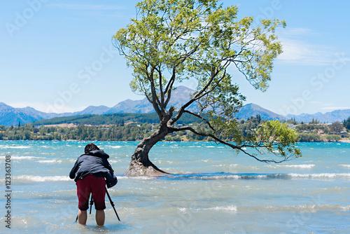 Poster Photographer taken tree at lake wanaka-NEW ZEALAND