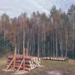 Świeże drewno