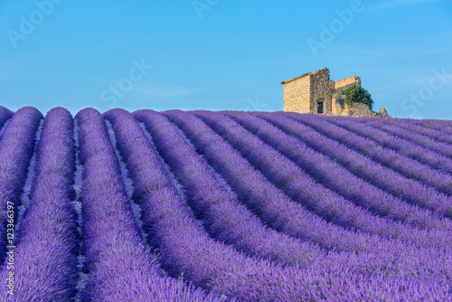 Poster Lavender Provence
