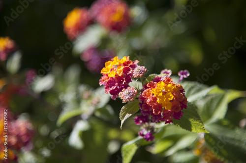 Poster, Tablou fiori e flora mediterranea