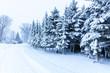 verschneite Tannen im Winter