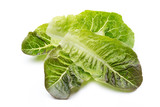 Oak Leaf lettuce isolated on white background.