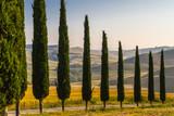 Toskana Landschaft Zypressenallee