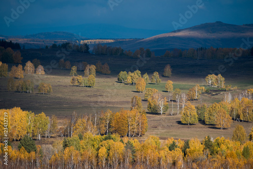 Vivid autumn birch forest