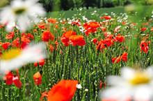 Sommer Frühling Natur Wiesenblumen