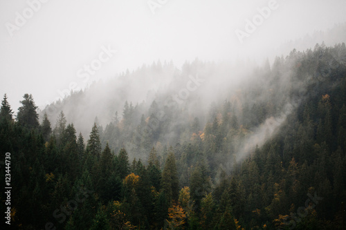 Forest with fog over the mountains - 123444730