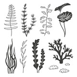 Seaweeds, corals and stones isolated on white. Set of aquarium plants silhouettes. Vector illustration.  - 123477192