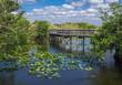 Florida Everglades Boardwalk with Alligator Swimming in Foreground