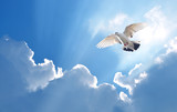 Dove in the air symbol of faith over shiny background - 123511982