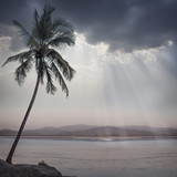 tropical background - 123516783