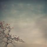 nature background - 123516907