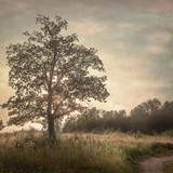 nature background - 123517152