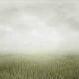 Nature summer landscape - 123517384